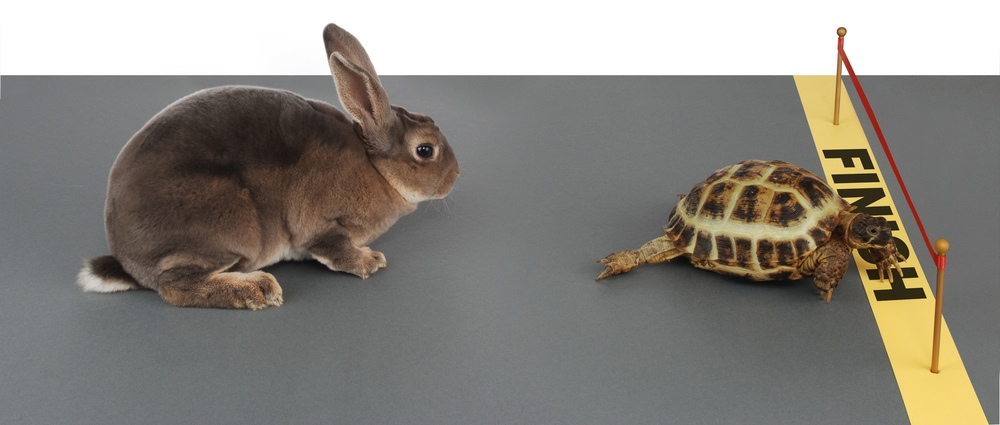 The hare or the tortoise, which is better for weight loss?